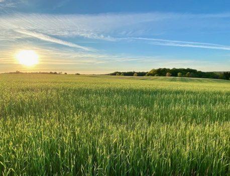 【太陽、運動、食事、自然】より明るく健やかに生きるために。